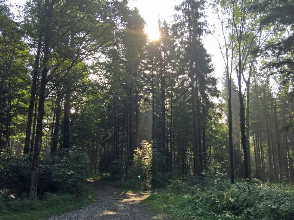 Lunge im Wald